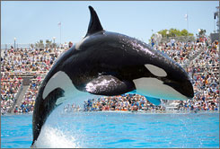 Global leap: SeaWorld and Busch Gardens? parks in Dubai will be on a killer-whale-shaped island.