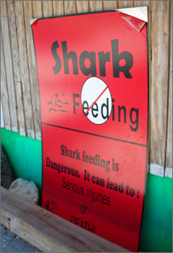 Warning signs notwithstanding, shark and fish feeding are common at dive sites throughout Belize.