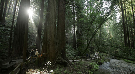 The Muir Woods National Monument, just a dozen miles north of San Francisco, gets a million visitors a year.