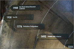 Famous moments in history are charted on the rings inside a giant redwood tree.