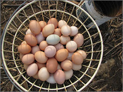 Breakfast: Freshly laid eggs from free-range hens at Fickle Creek Farm in North Carolina.