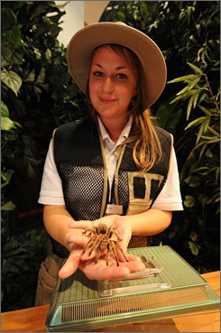 Not an insect, but close enough: Entomologist Elise Rome of the new Audubon Insectarium holds a Chilean rose-haired tarantula.