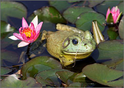 In the northwest Bronx is Wave Hill, with a dozen themed gardens, panoramic views of the Hudson River and princely frogs in a lily pond.
