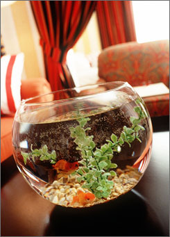 The Hotel Monaco in Denver provides goldfish to help guests relax.