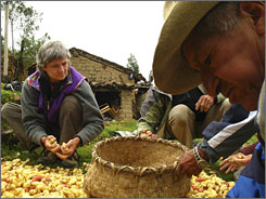 A villager from Vicos displays fresh oca, a Peruvian tuber, to visitors. As Peru becomes a prime tourist destination, travelers are seeking opportunities to learn about local customs firsthand.