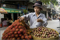 Along Hang Ma (Paper Street): Vendors in the Old Quarter often sell from the back of bicycles. Litchis are a specialty of this merchant.