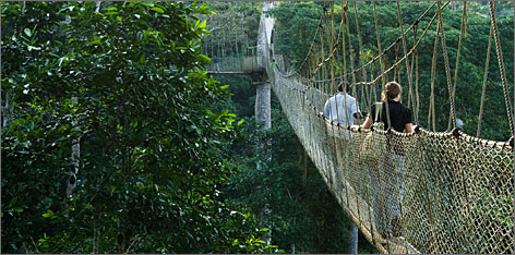 "Visitors walk along the ""canopy walk,"" a series of foot bridges suspended over 100 feet off the ground, in Kakum National Park, Ghana."