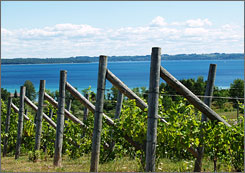 Willow Vineyard: In Suttons Bay, it overlooks West Grand Traverse Bay. Willow Winery specializes in Chardonnay, Pinot Noir and Pino Gris.