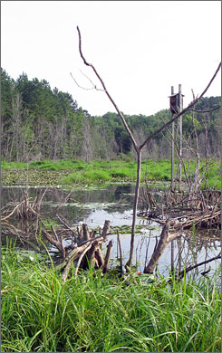 Federal law required Hartsfield-Jackson Atlanta International Airport to complete the wetlands restoration project after constructing its fifth runway.