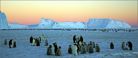 In Antarctica, January  brings longer days, (somewhat) hospitable temperatures and the hatching of baby penguins.