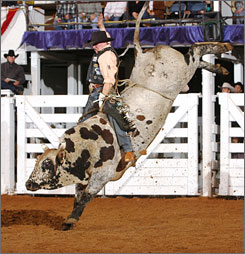 By the horns: The bull-riding competition is fierce at the Fort Worth Stock Show & Rodeo.