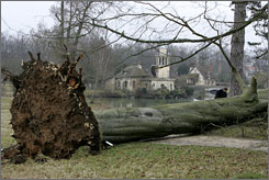 A 223-year-old beech tree in Marie Antoinette's garden at Versailles Palace was  ripped from its roots by a winter storm.