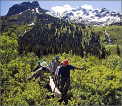 "Volunteers haul a ""stringer"" to be used on a trail structure in the Cascade mountains. The Washington Trails Association is reporting ""record sign-ups"" so far this season for volunteer vacations it sponsors in Washington State."