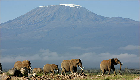Where are the snows of yesteryear? Mount Kilimanjaro, as seen from Amboseli game park in Kenya. The famous snow cap has been retreating for a variety of reasons.