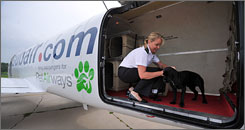 Pet Airways Alyse Tognotti prepares a canine passenger for his flight during a training session in Omaha, Neb., on July 9.