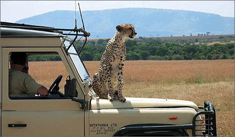 Mark Burnett says it's hard to beat Kenya's Masai Mara game reserve, where cheetahs, zebras and giraffes roam the plains.