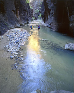 Zion National Park: Hikers walk through the rocky stream bed of Zion Narrows.