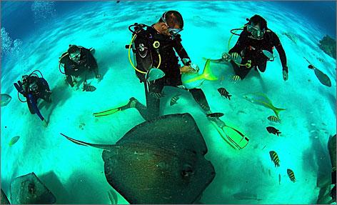 Famous Scuba Divers Scuba Divers Interact With