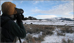 "One of the ""wolfies"": Calvin Johnston views a wolf pack with a spotting scope. He and his wife come often to spend long days searching for wolves."
