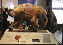 For the first time ever in the United States, an intact baby woolly mammoth from the Ice Age is on display at Chicago's Field Museum. Scientists say the mammoth calf named Lyuba is the best preserved and most complete mammoth specimen known.