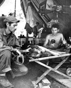 A Marine Corps dog handler comforts his German shepherd as it is X-rayed after being shot by a Japanese sniper.