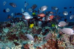 Hawaii's Papahanaumokuakea Marine National Monument has been named a U.N. World Heritage site.