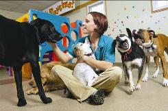 Best Friends operates more than 40 pet-boarding facilities around the U.S., including this one in White Plains, N.Y.