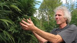 Splendor in the grass: Tim Blake, a longtime marijuana grower near Laytonville, sponsors the annual Emerald Cup for the best locally grown organic pot.