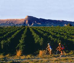 Grand Junction: Biking is a great way to tour the more than 18 vineyards outside this western Colorado town.