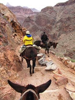 Mule riders make the turn at aptly named Jesus Corner before making another steep descent through a series of switchbacks dubbed the Devil's Corkscrew.