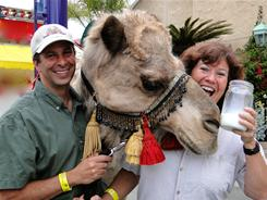 Gil and Nancy Riegler show off the milk of their labor while Sheba the camel tries to steal a taste at Oasis Camel Dairy, in Ramona, Calif.