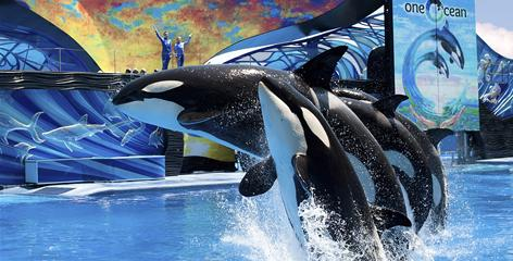 "SeaWorld's new Shamu show, ""One Ocean,"" debuted in April, replacing the well-worn ""Believe"" show."