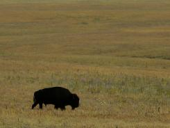 The 11,000-acre Tallgrass Prairie National Preserve gives tourists a glimpse of what settlers on the Kansas prairie would have seen.
