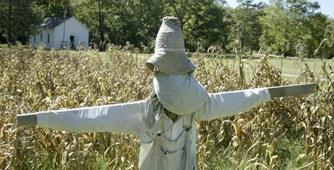 A scarecrow protects a field of corn in front of the old schoolhouse in the Ozark National Scenic Riverways.