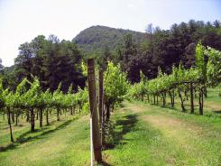 One of three vineyards at Tiger Mountain Winery in Tiger, Ga. soaks in the sun.