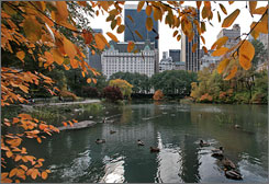"Ducks swim amongst fall foliage in the Central Park Pond, New York, Wednesday Nov. 14, 2007. In the 1951 publication of ""The Catcher in the Rye, its main character Holden Caulfield wanders around Manhattan at Christmastime visiting key landmarks,  including the duck pond."