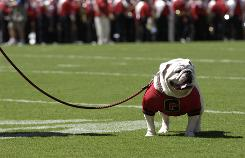 University of Georgia mascot, the late Uga VI, takes the field before Georgia's game against Marshall in 2004. The university tops the 2010 Princeton Review ranking of party schools.