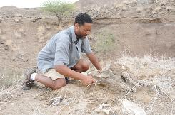 Project leader Dr. Zeresenay Alemseged excavating a freshly found 3.4 million-year-old rhino fossil of a species that lived at the same time and place where the Australopithecus afarensis butchered carcasses using stone tools.
