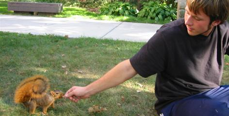 Sunday afternoon ritual: A University of Michigan club feeds squirrels on campus every week.