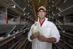 Ben Thompson, CEO and vice president of Pearl Valley Egg Farm near Kent, Ill., holds a 23-week-old hen as eggs from other hens move past him on a belt.