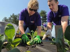 Ted Feller, and Michele Hruska team up as they put plants in the ground in one of several freshly prepared plots.