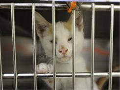 A kitten gets friendly at the ASPCA clinic in Queens, N.Y.