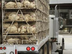 A truckload of live turkeys arrives at the Cargill turkey processing plant in Springdale, Ark., on Aug. 4.