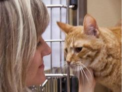 PetSmart Charities' Michelle Thompson snuggles up a cat in need of a home at the Hulen, Texas, Enhanced Adoption Center.