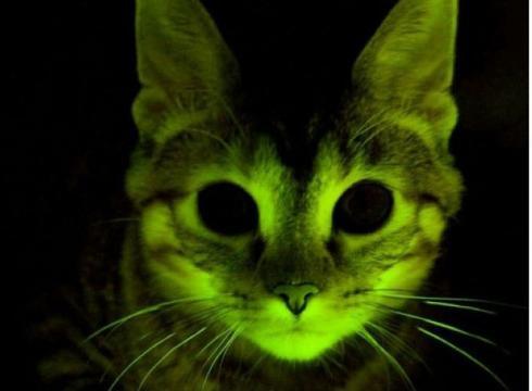 Glow cat
