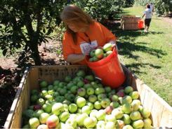Irene Morris, volunteer and apple captain for a food bank in North Carolina.