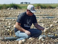 Owner Eric Jensen checks cantaloupes Wednesday at Jensen Farms near Holly, Colo. Officials warned that the number of deaths and illnesses may rise.