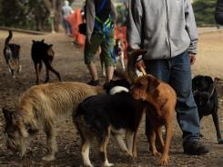 Dogs walk off-leash with their human companions at Fort Funston in San Francisco. There are more dogs in this City by the Bay than there are kids. So it stands to reason dog owners carry a lot of clout.