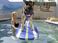 Mary Kay Benson gives German shepherd Heidi a surfing lesson at the training pool, complete with colorful beachfront murals on the walls, at the Barkley Pet Hotel & Day Spa in Westlake Village, Calif.