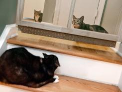 Cleo, perched on the stairs, stares at Ollie, right, while Brutus, backgrond left, stays at a distance at the home of Kelly and Justin Lucas in Atlanta.